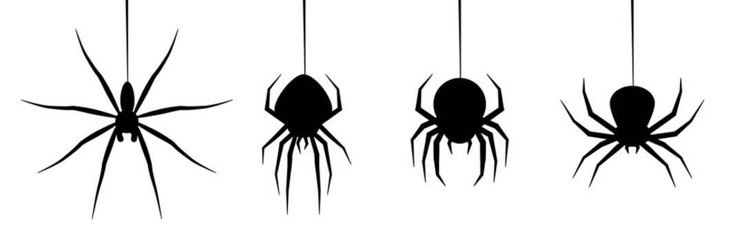 halloween spider's web vector. black spider on white background. danger insect. horror banner, scary poster. cobweb isolated decoration stock illustration. october holiday flyer mockup mock up