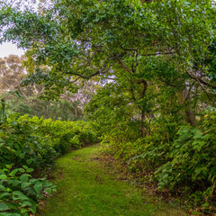 Path to Nature