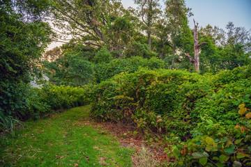 Summer Meadow Path
