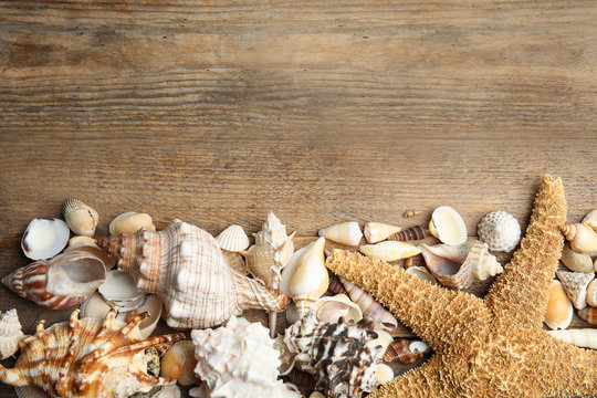 Sea shells on wooden background, flat lay. Space for text