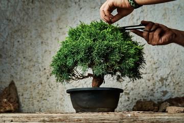 Printed kitchen splashbacks Bonsai Hands pruning a bonsai tree on a work table. Gardening concept.