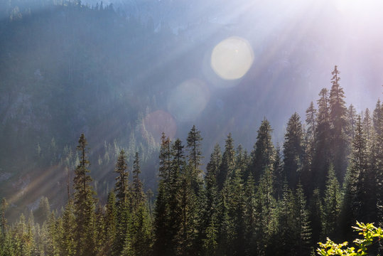 Evergreens are illuminated in the mountains on a sunny afternoon