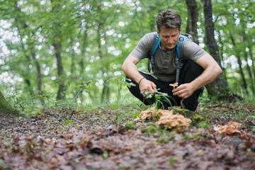Man picks edible mushrooms in the forest