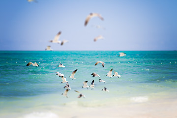 A flock of seabirds flying over the Caribbean waters.