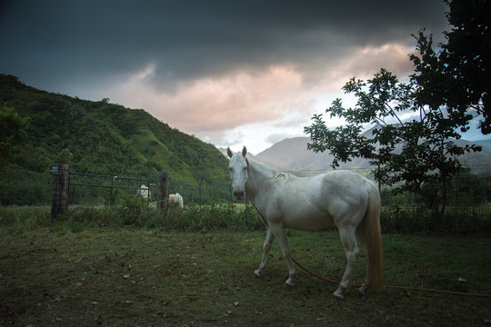 horse and the mountains of Hawaii kauai
