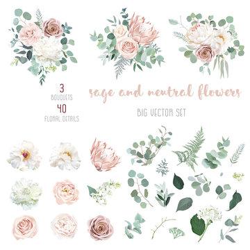 Pale pink camellia, dusty rose, ivory white peony, blush protea