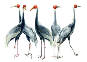 Flock of birds, set of birds, cranes, isolated white background, watercolor illustration, clipart