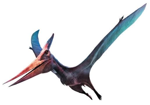 Pteranodon flying dinosaur 3D illustration