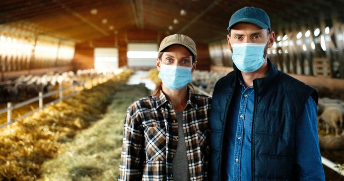 Portrait good-looking Caucasian woman and man in medical masks standing in stable with sheep, looking at straight at camera. Couple of farmers family at sheep farm. Barn with cattles during pandemic.