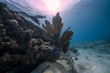 Coral Reef Wall mural