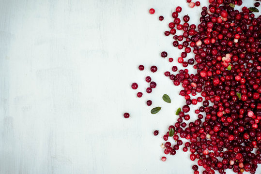 berries of a cranberry on a white background