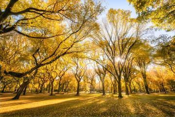 Bright autumn leaves in sunlight