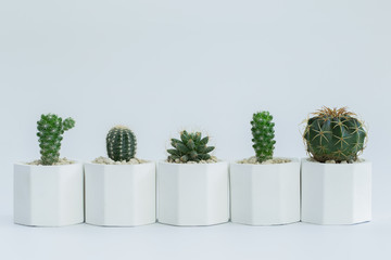 Collection of cactus or succulent plants different in pots, over white background.