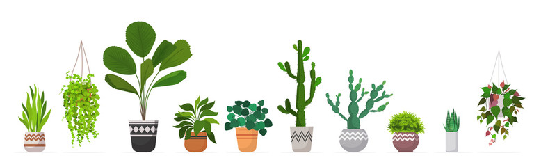 set decorative houseplants planted in ceramic pots different garden potted plants collection isolated horizontal vector illustration
