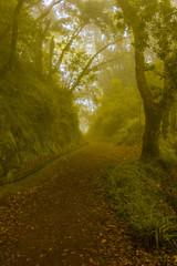 Garden Poster Forest Madeira Island