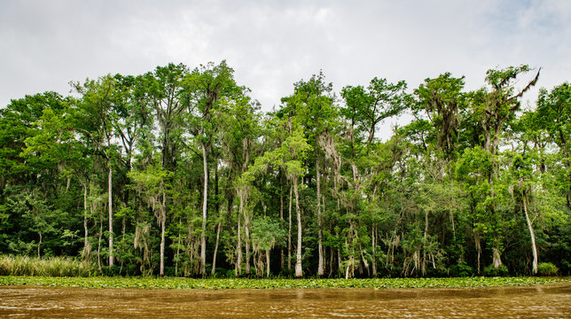 Swamp land in New Orleans, Louisiana, United States