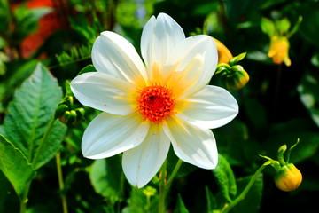 Piękne kwiaty zakwitające latem w ogrodzie botanicznym