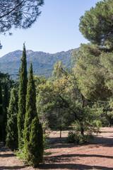 las góry drzewa natura przyroda liście