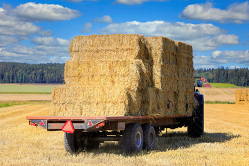 Tractor with Load of Straw Bales on Trailer in Stubble Field.