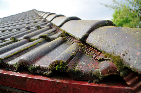 Moss on a roof tile