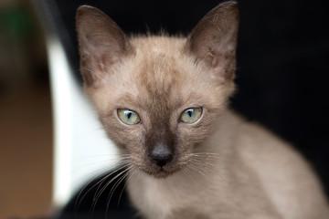 Selective focus kitten on black background.