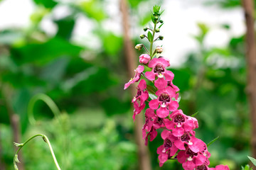 Detail on a pink tropical blooming orchid plant in spring