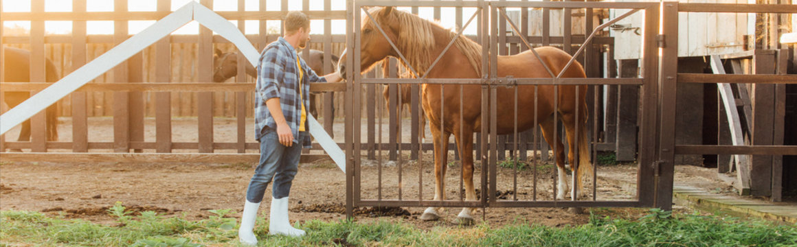 panoramic concept of rancher in plaid shirt and rubber boots touching brown horse in corral
