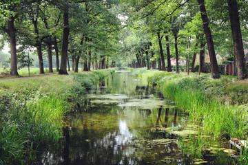 Poster de jardin Olive Tree lined canals in the sunlight, Griendtsveen, Netherlands