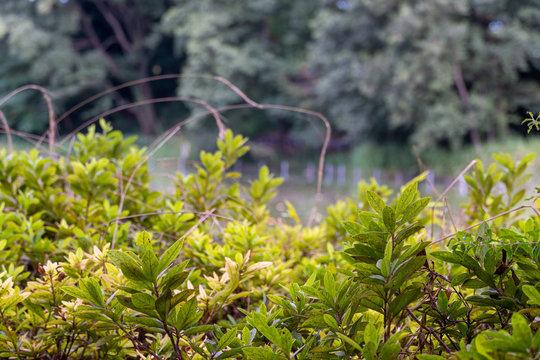 公園の木の手前と奥をぼんやり眺める