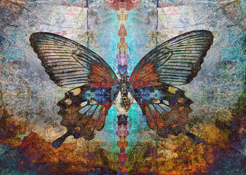 Magic Shaman butterfly