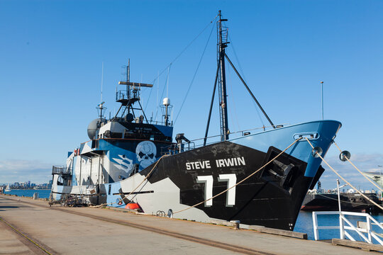 Melbourne, Australia - Sep 5, 2015: MY Steve Irwin, flagship of the Sea Shepherd Conservation Society, at a dock in Melbourne, Australia