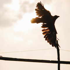 Silhouette of a crow flying against the sun