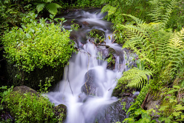 silk like water flow in forest