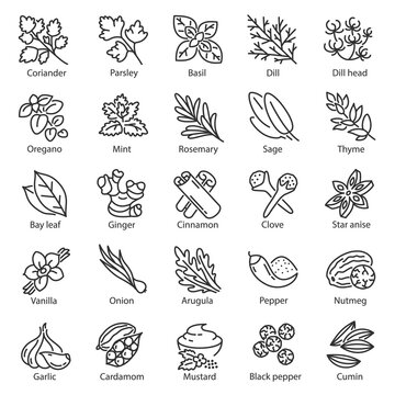 Spice icon set. Kitchen herbs, linear icons. Condiment. ginger, rosemary, sage, thyme, mint, onion, basil, arugula, nutmeg, mustard, vanilla etc, Line with editable stroke