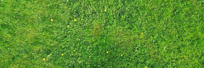 Photo sur Plexiglas Pres, Marais green grass top view, abstract nature field background