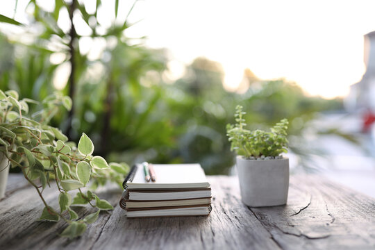 Notebooks and pencil with small cute green plants nature lifestyle