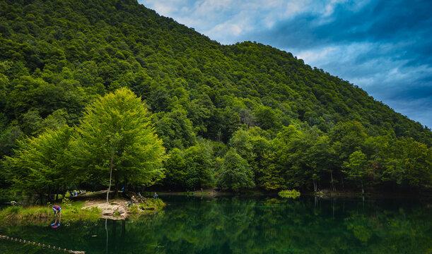árboles en lago de montaña