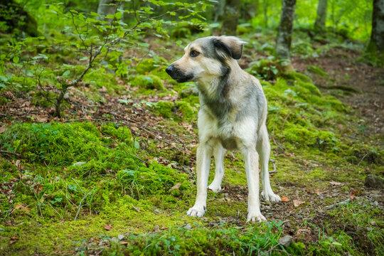 cachorro en bosque