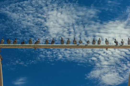 black and white, clouds, weather, pole, swing, pigeon, flock, california, west coast, ,rest, animal, fly, perch, summer, day, sky