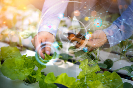 Futuristic farmer farming hydroponic vegetables and plant using modern AI technology using mobile phone, temperature and water moisture sensor tracking weather control data information icon hologram
