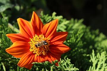 Obraz kwiat pszczoła - fototapety do salonu