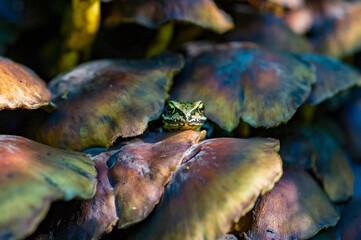 Wall Murals Frog frog - kikker