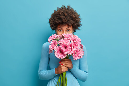 Good looking delicate African American woman smells rosy gerbera flowers, enjoys pleasant odour holds bouquet in hands, has tender look at camera, comes on romatic date with boyfriend, blue background