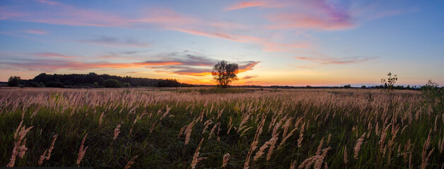 Wide panorama with red sunset and one tree on a center of frame