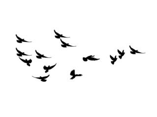 silhouette Flock of Flying Birds. flying birds on white background. vector illustration