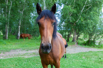 The horse poses for the camera in the field.