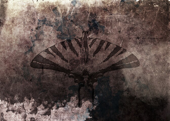 vintage butterfly on grunge background