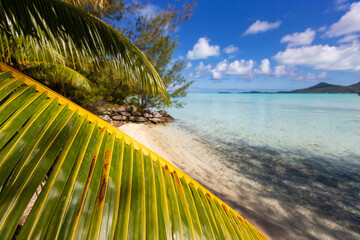 General view of palm frond on beautiful sandy beach with turquoise water in French Polynesia