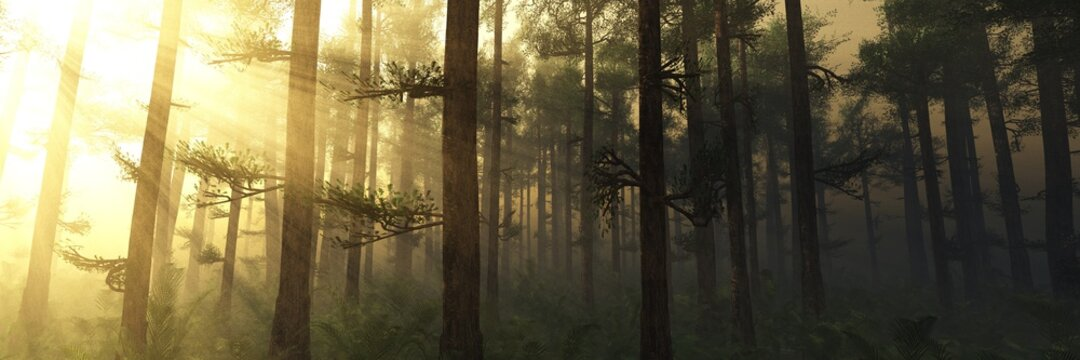 Sun rays through the trees, forest in the fog in the rays of light, trees in the haze, 3D rendering, Forest in the morning in a fog in the sun, trees in a haze of light, glowing fog among the trees