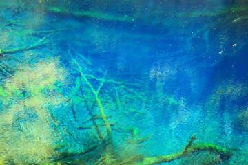 青池に沈む樹木